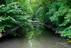 Mit dem Bach durch den Wald
