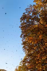 Der Herbstwind