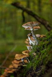 noch ein Pilz