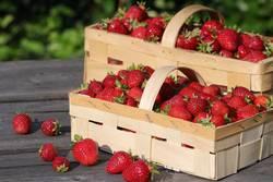 Erdbeer-Traum