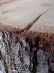 Holz Ist!