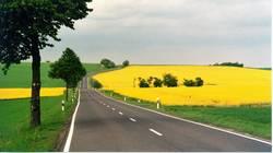 Landstraße mit Rapsfeldern