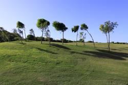 Golfplatz mit Bäumen