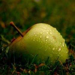 der Apfel fällt nicht weit vom Stamm II