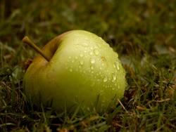 der Apfel fällt nicht weit vom Stamm I