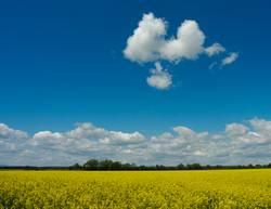 Canola cloud