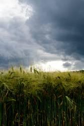 Gewitter über dem Kornfeld