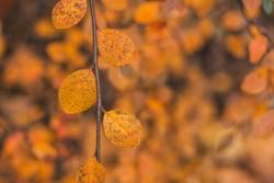 Closeup autumn image