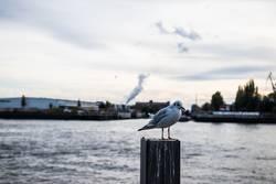 Vogel als Pfahlsitzer