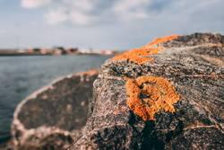 Leben auf dem Stein