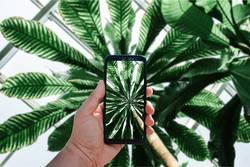 Smartphone Blick ins Palmendach