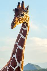 Neck and head of a giraffe near a green tree