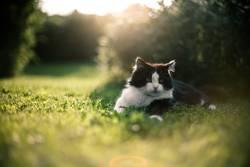Katze Garten Frühling
