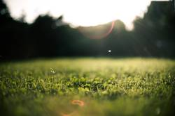 Garten Sonne