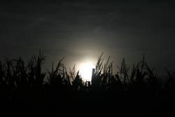 Mond hinter Maisfeld
