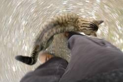 Katzenrunde