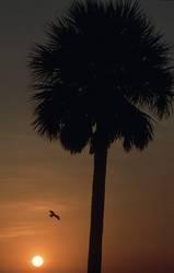 Palmenuntergang