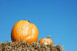 EIN Kürbis macht noch keinen Herbst ...