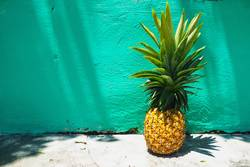 Huge Pineapple on turquoise wall with sunlight