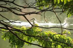 white bird along a lake