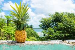 Pineapple on a wall with view to Bacalar lake