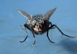 Fliege 01