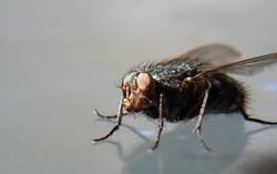 Fliege 02