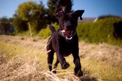 doglife