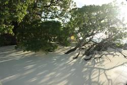 wild dream - Malediven