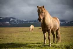 Der Isländer