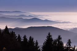 Am Rand des Waldes