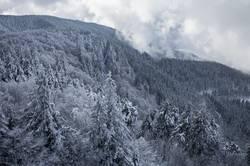 weisser Schwarzwald