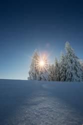 Winterwaldsonne