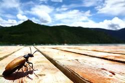 Sonnenbad am See