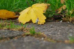 Alter Mann, Herbst