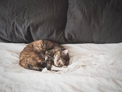 A Cat Sleeping on a Bed