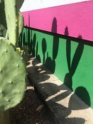Cactus Casting Shadows on a Colorful Wall
