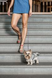 Crop female with dog on stairs