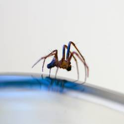 Ich Spinne