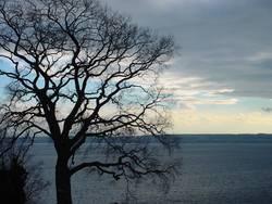 Baum und Wolken