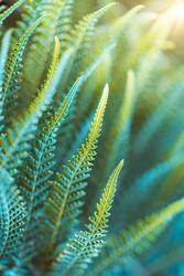 Farn Pflanze [16092018_2785]