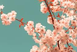 Kirschblüte Trendfarbe Pantone Living Coral