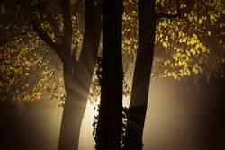 Bäume in herbstlicher Abendstimmung