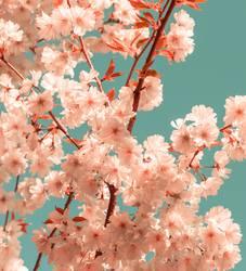 Kirschblüte Farbton Pantone Living Coral und Emerald