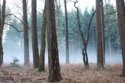 Nebel des Grauens...