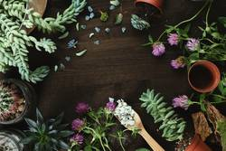 flowers and succulents on wooden table