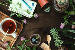 flowers, succulents and tea with notebook on wooden