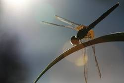 dragonfly on the spot