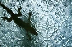 gecko hinter glas