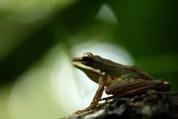 frosch im brennpunkt
